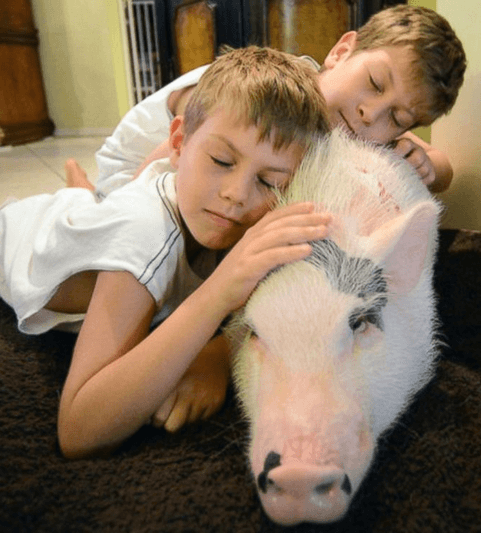 Children hugging pig